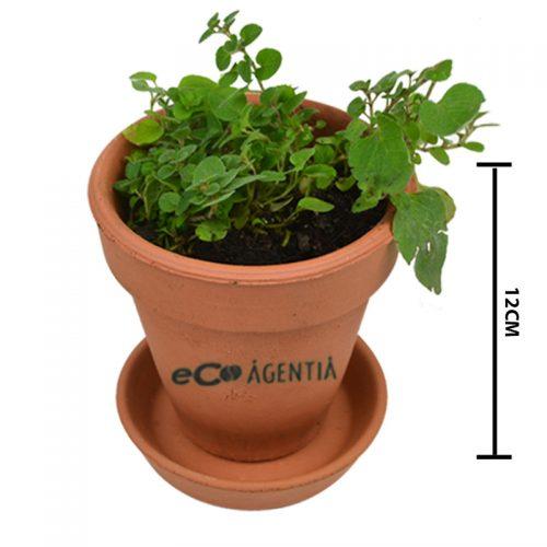 semillas jitomate cilantro zanahoria rbano chia alfalfa chile albahaca espinaca nube floral se puede imprimir en maceta